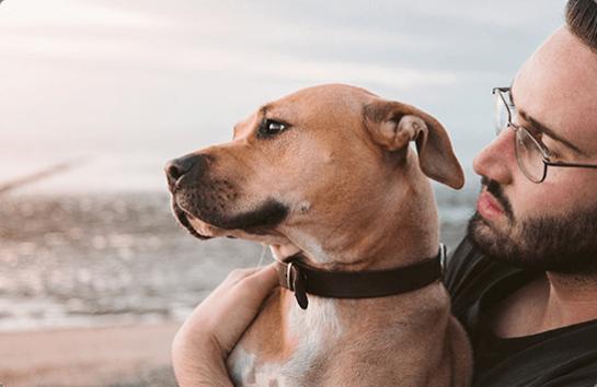 Dog And Man On The Beach