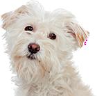 20 Productspage Hero Dog04